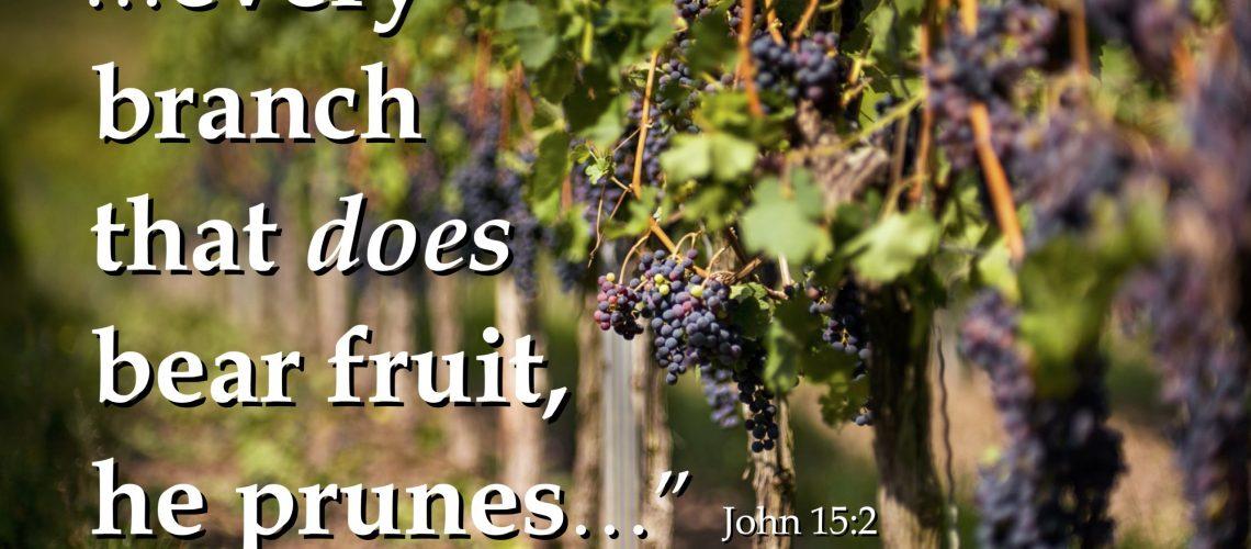 John 15.2